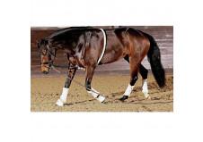 HorseGuard Longehjælp